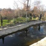 Ландшафтный дизайн и пруд