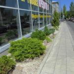Озеленение в городе от Сады Алтая