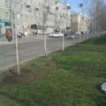 Озеленение придорожной зоны города