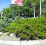 Озеленение придорожных зон