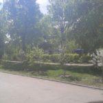 Посадка деревьев вдоль дорог