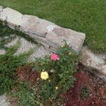 Чайно-гибридные розы в ландшафтном дизайне